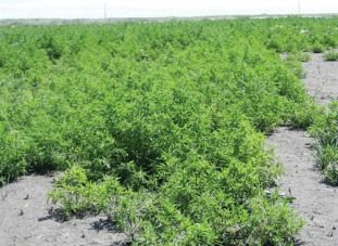 Add-PREs-to-your-weed-management-plan