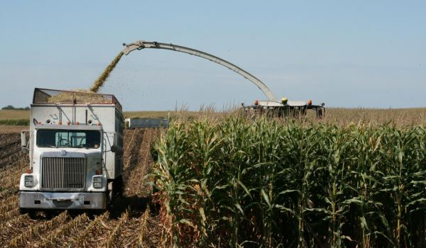 corn-silage-getting-it-just-right