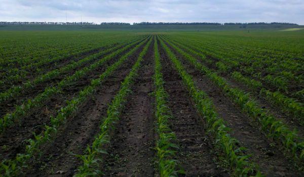 maximize-profit-with-fertilizer-program-and-plant-spacing